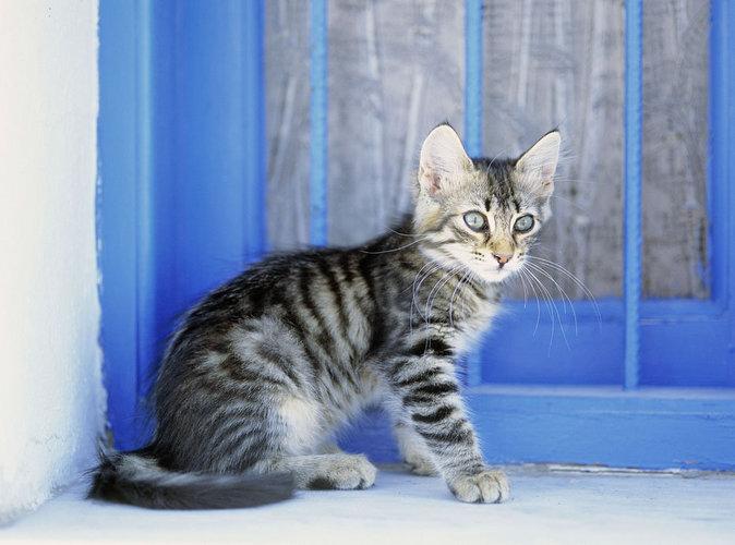Public Buzz : il sauve un chaton égaré sur l'autoroute !