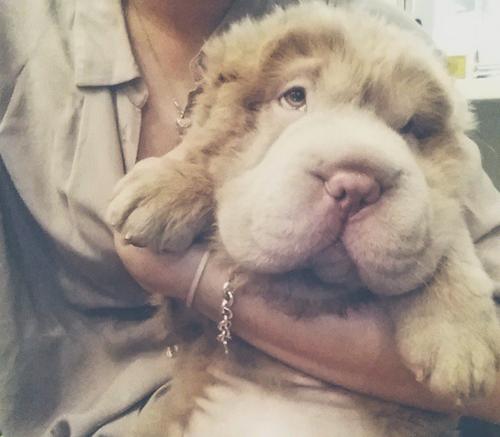 Public Buzz : Photos : vous allez fondre devant Tonkey, le chien le plus mignon d'Instagram !