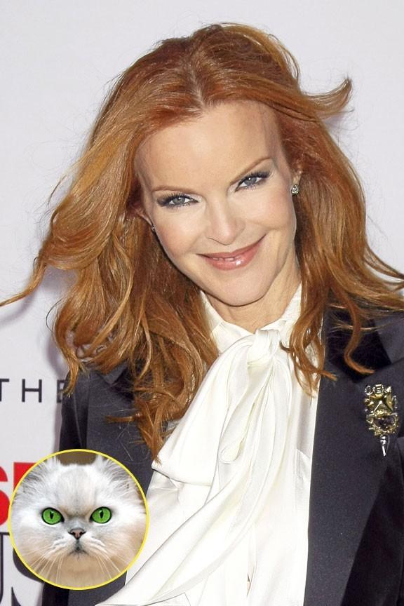 Marcia Cross : regard félin et crinière de feu : Garfield, sors de ce corps !