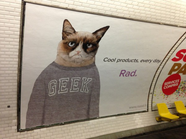 Grumpy Cat, le chat star !