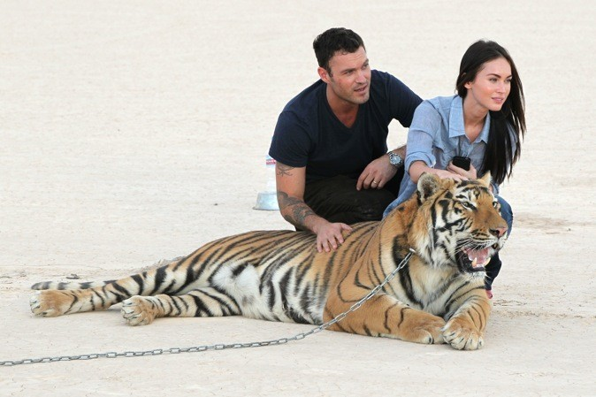 Ils posent avec un tigre...