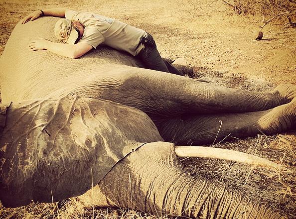 Balèze, le Prince Harry sauve 262 éléphants !