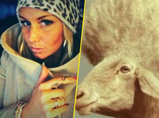 Buzz : Aurélie Van Daelen : concurrencée par des moutons !