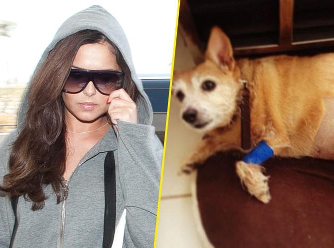 Cheryl Cole appelle au soutien ... sa chienne a le cancer !
