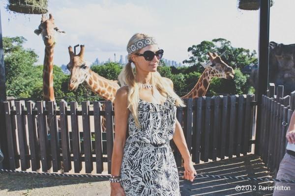 Petite visite chez les Girafes