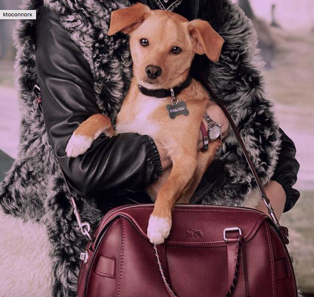 Ariana Grande : Son chien lui vole la vedette !