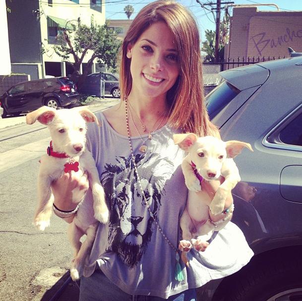 Ashley Greene : une belle adoption !