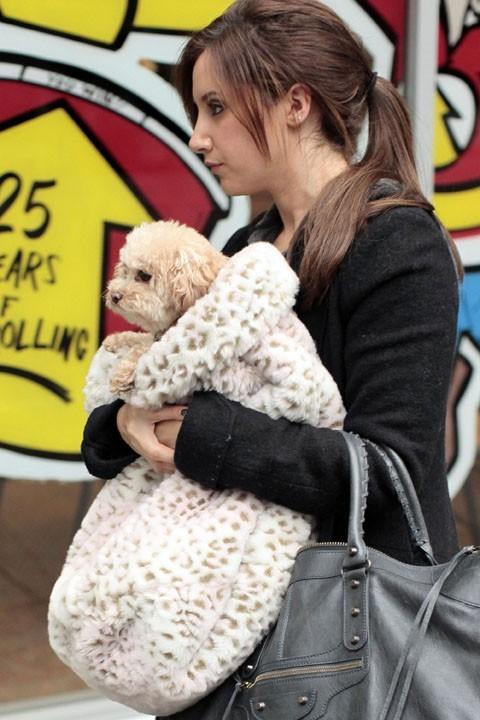 Ashley Tisdale est devenue complètement gaga de son chien ou quoi ?