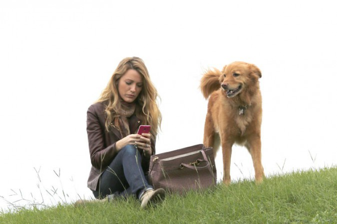 Blake Lively avec son chien Baxter à Los Angeles le 5 novembre 2013
