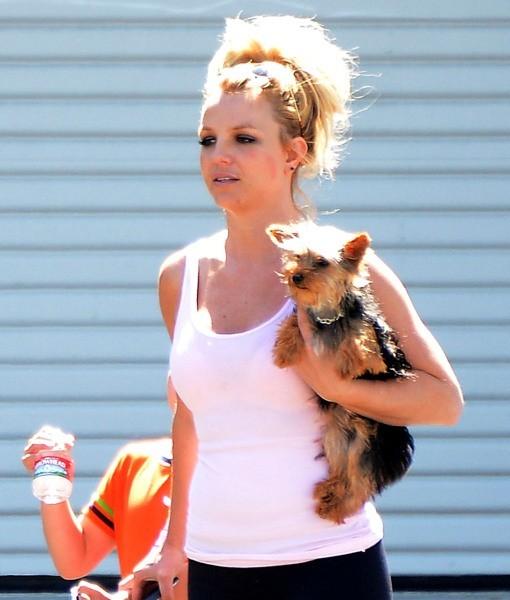 Britney Spears et son autre mini chien, le 12mai 2013 en Californie