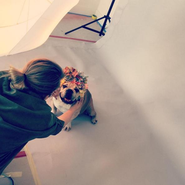 Photos : Chrissy Teigen et John Legend : séance photo romantique... Avec leur chien !