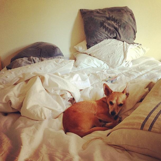 Emily Wickersham a un chien baptisé Miguel
