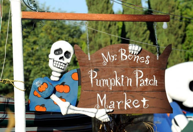 Shawn's Pumpkin Patch à Santa Monica !