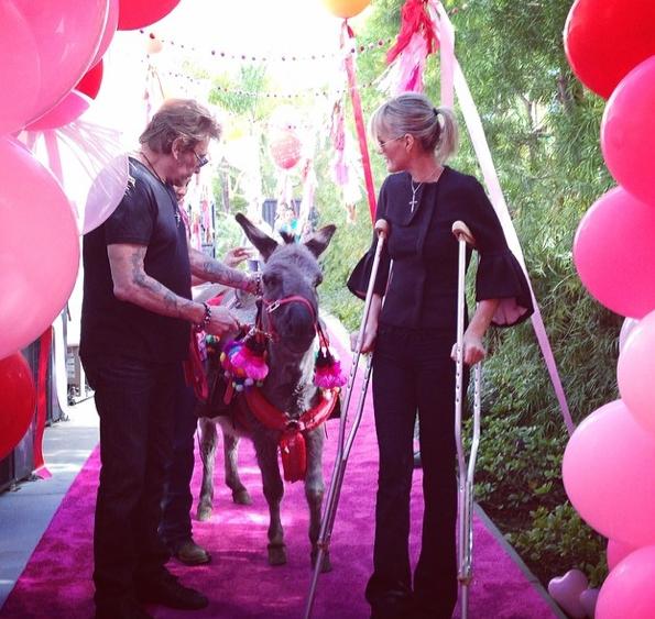 Photos : Johnny Hallyday : Laeticia lui offre un âne pour la Saint-Valentin !