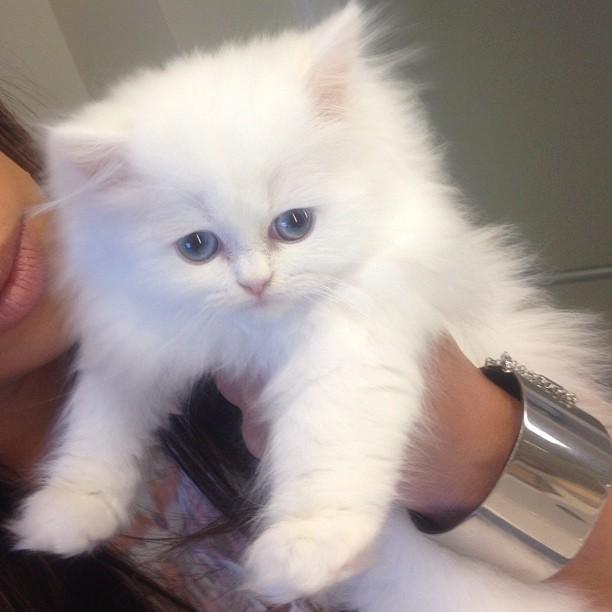 Mercy a de magnifiques yeux bleus !
