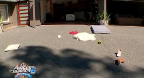 Restée seule à la villa, Linda se venge de Julien en balançant ses affaires