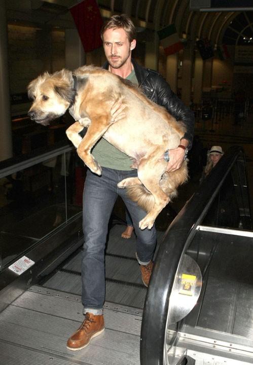 Ryan Gosling prendra soin de George jusqu'à la fin...