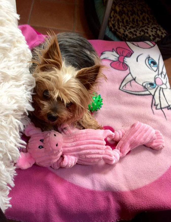 Loana a perdu son chien, Tamy