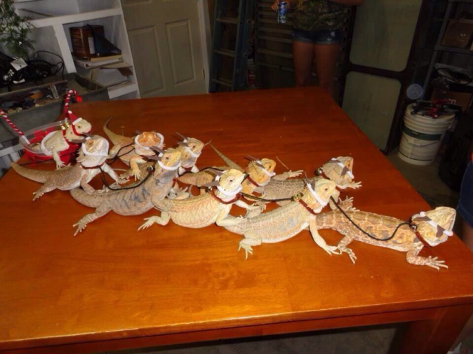 Lorde semble adorer les reptiles...