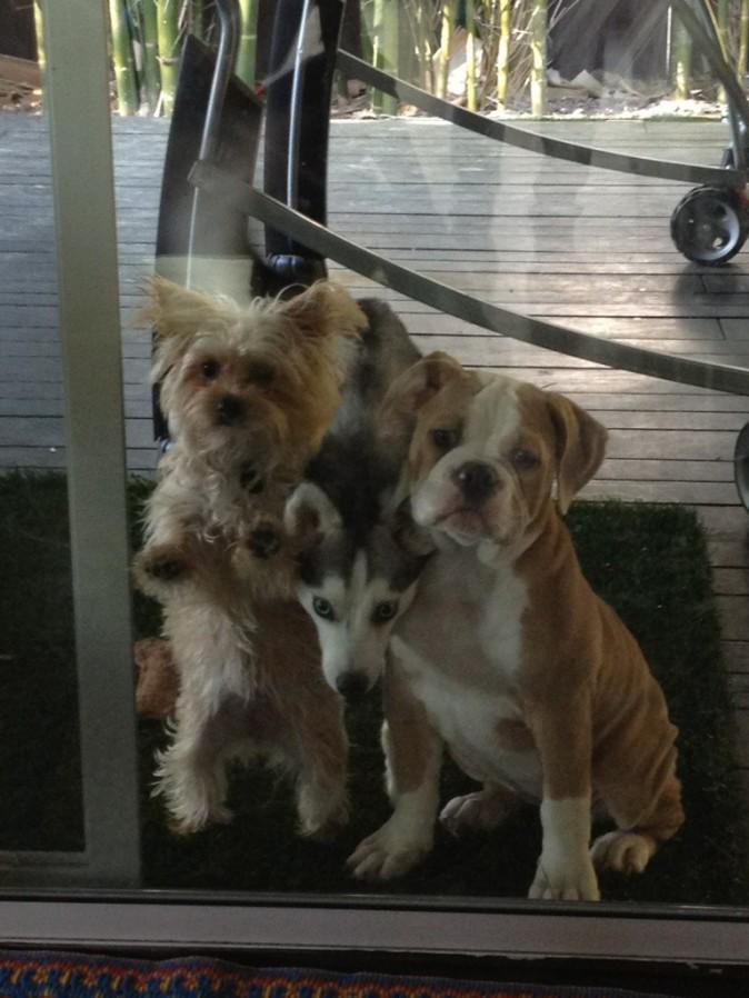 Ziggy, Floyd et Lila derrière la vitre