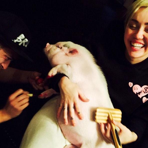 Miley Cyrus : son dernier délire, faire une beauté à son cochon !