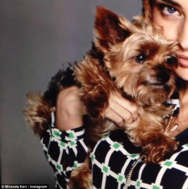 Miranda Kerr et son chien Frankie en plein shooting.