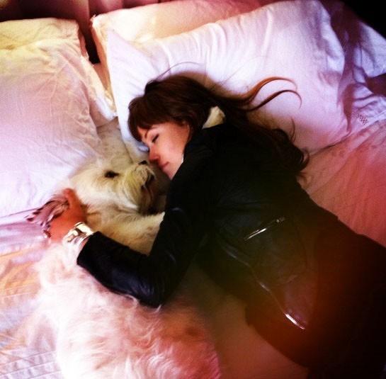 Le nouveau copain d'Olivia Wilde ? Non, son chien !