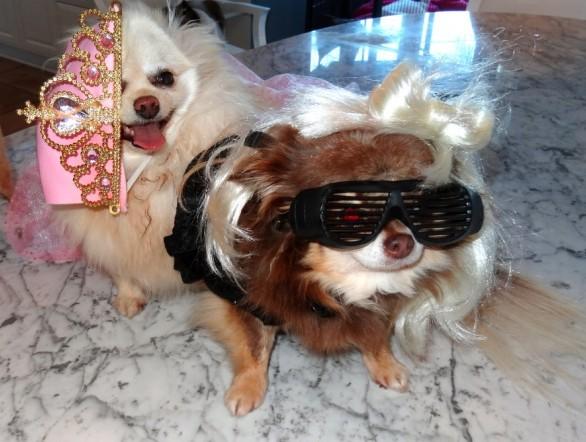Paris pense à tout pour ses chiens ! Même aux accessoires de mode !
