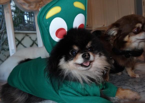 Quel joli déguisement pour un petit chien... même si on ne sait pas trop à quoi ça ressemble !