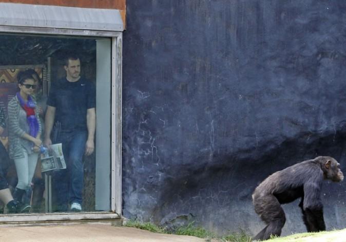 Stoïque devant le gros singe !
