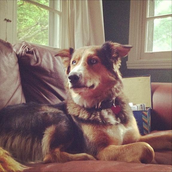 Sophie Nélisse a un chien !
