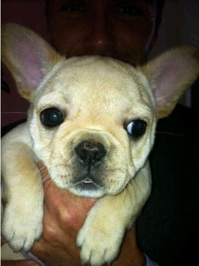 Photos : Scarlet, le nouveau chien de Victoria Beckham : c'est l'histoire de la vie !