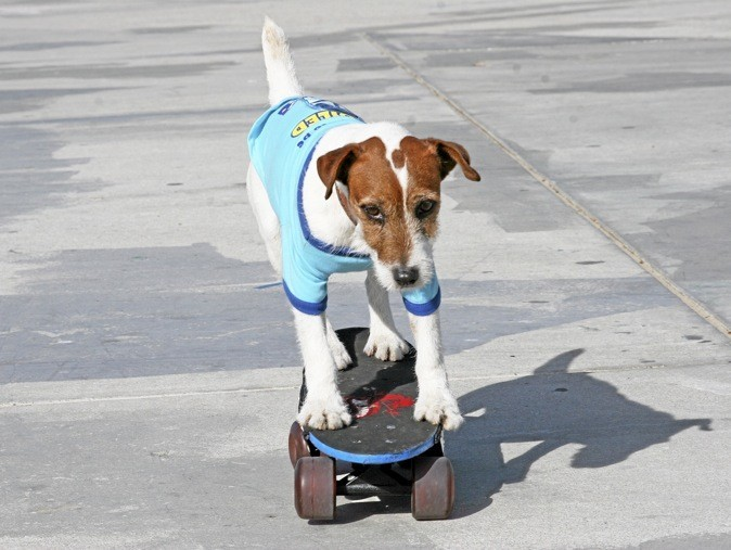 Uggie est aussi un pro du skateboard !