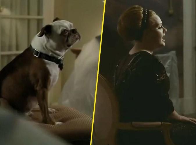 Vidéo : Adele : écoutez Rolling in the Deep repris par un chien !