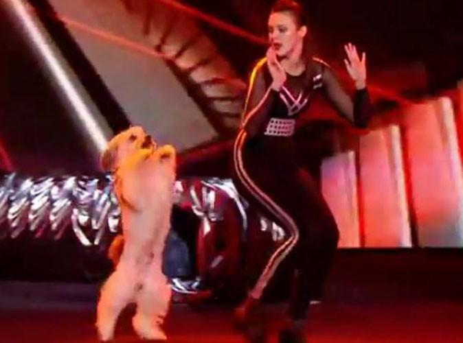 Vidéo : découvrez l'incroyable gagnant de Britain's Got Talent 2012 !